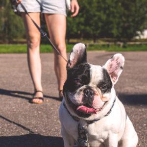 Palmetto Bay, Pinecrest, Kendall, FL dog training