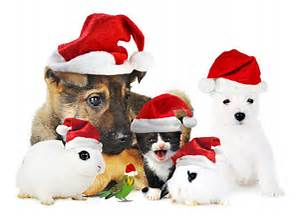 Cute pets wearing Santa Hats