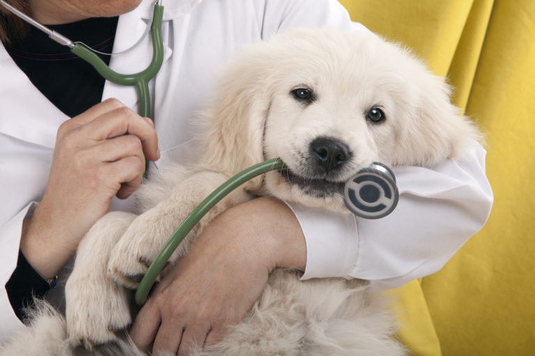 Mobile Veterinarians in Miami