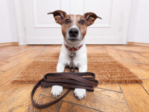 Dog in front on door with leash resting on paws.