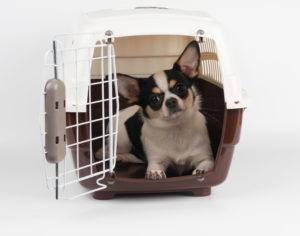 Dog in crate with the door open,