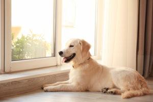 Cute dog near window at home