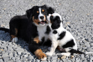 Two puppies on gravel surface