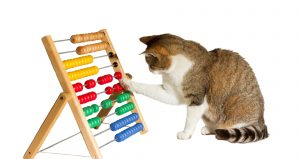Cat with abacus