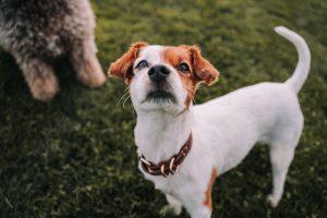 Small dog at park