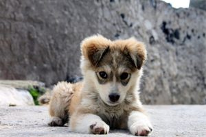 A small dog